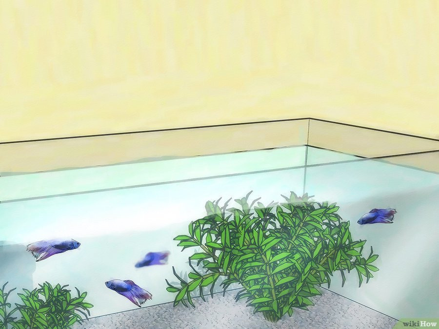 v4-900px-change-your-betta-fish-water-step-12-version-2