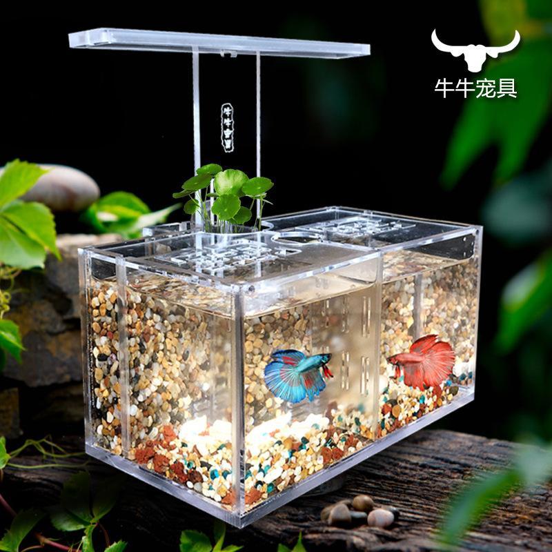 acquario-di-pesce-acrilico-scatola-di-isolamento
