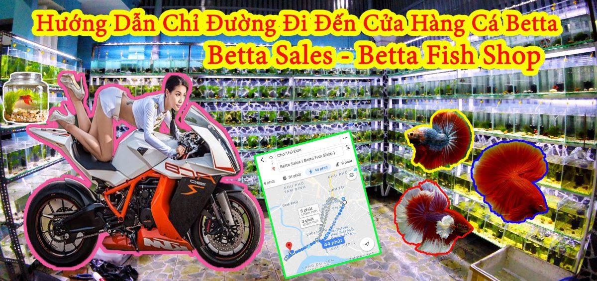 Hướng Dẫn Chỉ Đường Đi Đến Cửa Hàng Cá Betta Sales – Betta Fish Shop | 0777678979 | BettaSales.net