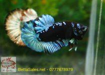 black-blue-1