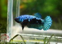 black-blue-1234